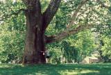 17_treehugger_1.jpg