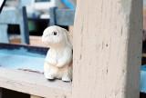 15_cute_(or_dangerous?)_bunny.jpg