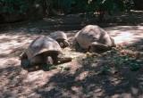 06_tortoises.jpg