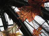 11-11-2006_12-00-03.jpg
