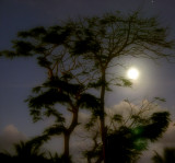 Saipan Moon and Flame Tree