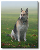 Trixie : Doggies in the Mist