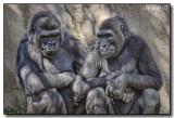 San Diego Wild Animal Park, Part 2