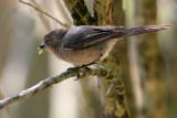 IMG_0647 birds.jpg