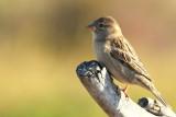 IMG_1901 birds.jpg