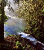 Fog, sun, tree, river, creek & moss