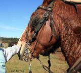 Happ's 2007 Horse Power Days