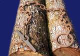 Log boom Chain