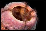 Tube Sponge and Brittle Star