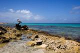 Bonaire Coast and Pelican