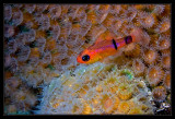 Night time on the reef, the polyps are out...