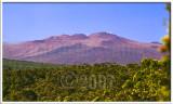 Mauna Kea viewed from Volcano House