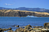 8 March 07 - The Interislander enters Wellington
