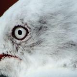 8 May 07 - Bird's Eye