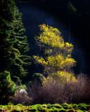 11 May 07 - Autumn sun on trees