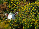 One among gorse
