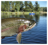 September 15, 2007 --- Beaver Lake, Alberta