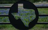 Texas Wildflowers