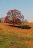 TREE IN TENNESSEE_0671.jpg