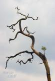 TWISTED TREE-7391.jpg