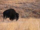 Montana - National Bison Range