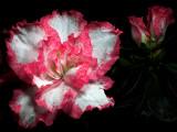 2006-11-21 Flower