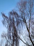 Soft trees