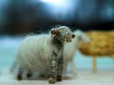 2007-02-25 Sheeps
