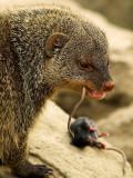 2007-04-22 Eating mice