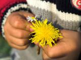 2007-04-24 Flower
