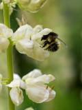2007-06-02 White flower