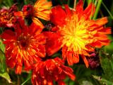 2007-07-13 Small orange