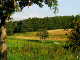 2007-08-02 Tree
