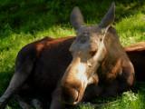 2007-08-05 Moose