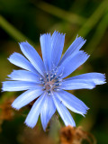 2007-09-07 Light blue