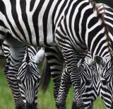 Zoo zap