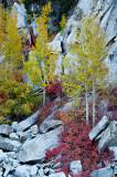 Color & Sierra Granite