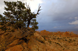 Pine Tree form and Red Rock