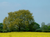The Lincolnshire Countryside