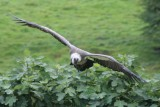 Birds of Prey & Conservation Centre, Sion Hill Hall
