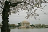 2007 Cherry Blossom