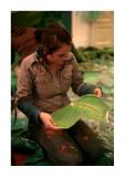Leaf Making