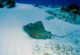 La Francesca Reef