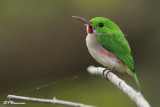 Les oiseaux de Punta Cana