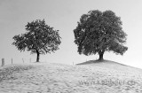 Baeume / Trees (8772)
