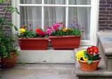 Blumen / Flowers (00559)