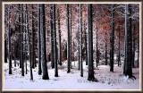 Winterwald (8716)