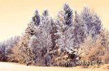 Winterwald (8699)