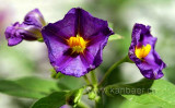 Blume / Flower (4565)