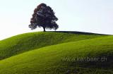 Trees / Baeume